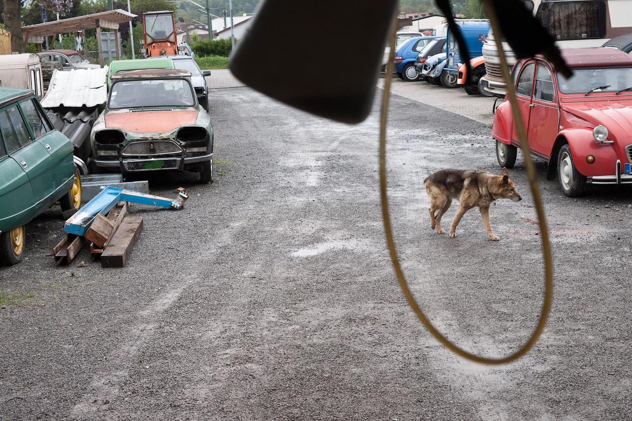 Das Foto entstand auf dem Gelaende der Auto-Werkstatt Franz Schreier 2CV Service+Teile in 74889 Sinsheim-Reihen, Baden-Wuerttemberg, Deutschland am 7. Mai 2010 um 12.35 Uhr. Zu sehen ist der Hund des Chefs Shorty, umrahmt von einem Schlauch im Vordergrund. Man sieht weiterhin den Hof u.a. mit Autowracks und einem Citroen 2CV.
