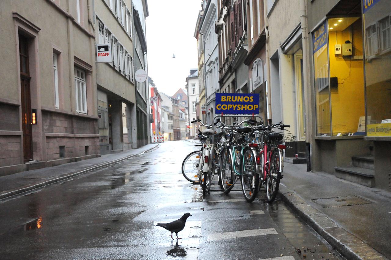 """Heidelberg, """"In der Plock"""" am frühen Morgen, Tauben suchen nach Essbarem"""