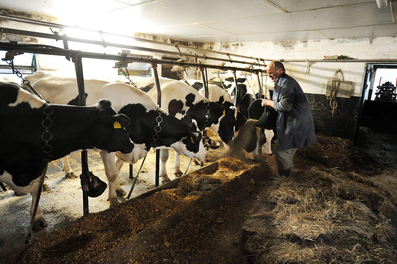 Der Landwirt Hans Gustke ist am Freitag (07.05.2010) früh auf. Kurz nach 6 Uhr morgens füttert er im niedersächsischen Cluvenhagen (Landkreis Verden) seine Kühe, bevor sie gemolken werden. Der Hof Gustke zählt noch zu den alten kleinbauerlichen Vollerwerbsbetrieben, bei dem die gesamte Familie mit anpacken muss.
