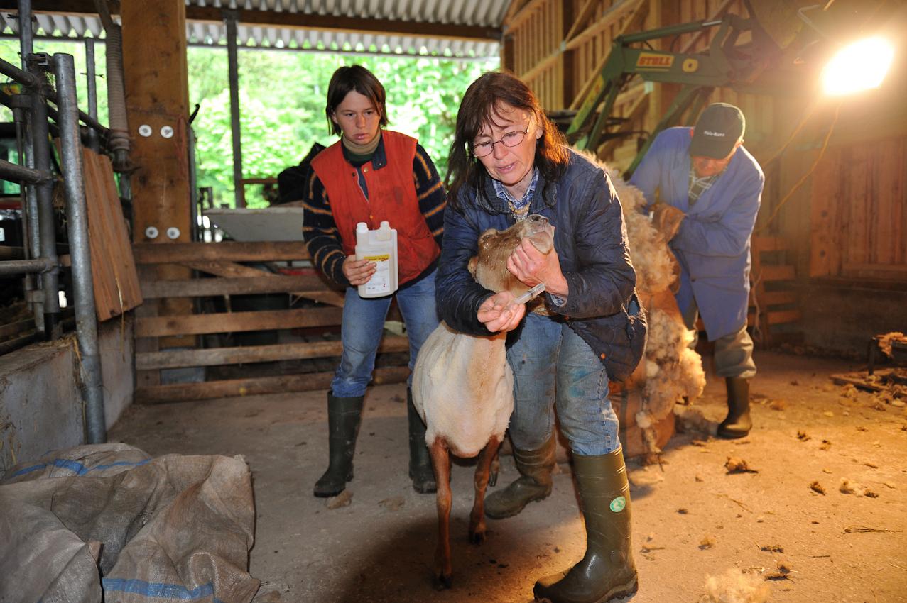 """Trudel  und Adeline Franck, Weinbäuerin und Rinderzüchter aus Leidenschaft. Hier allerdings bei einem der vielen """"Hobbies"""" der Familie - der Schafzucht. Einmal im Jahr werden die Schafe geschoren und bekommen einen Schutz gegen Parasiten. Die Familie Franck vertritt die """"slowfood"""" Initiative für nachhaltige Landwirtschaft."""