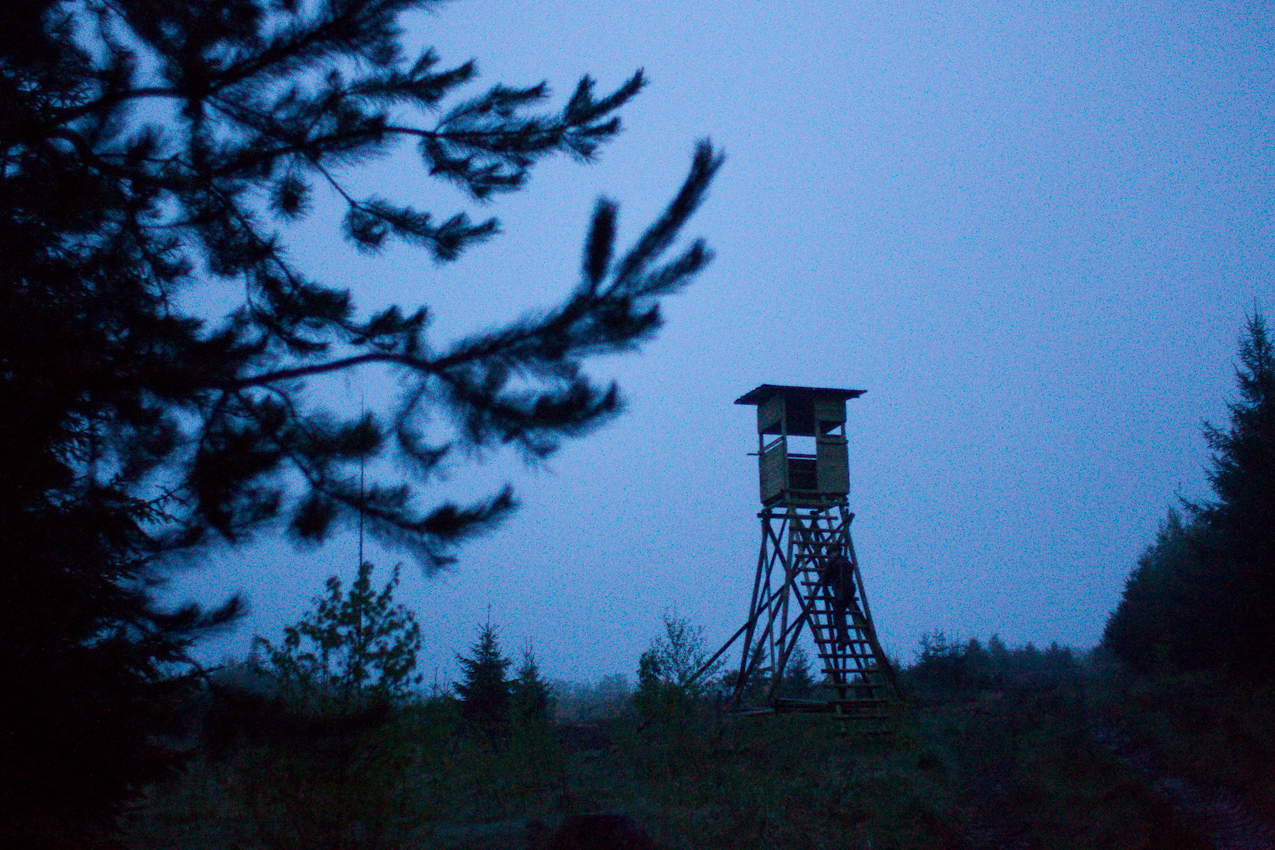 In der Morgenämmerung besteigt Gunter Mantel, Förster im Revier Oedelsheim an der Oberweser, seinen Hochsitz. Er hofft beim Morgenansitz an einer Windwurffläche Schwarzwild (Wildschweine) schießen zu können.