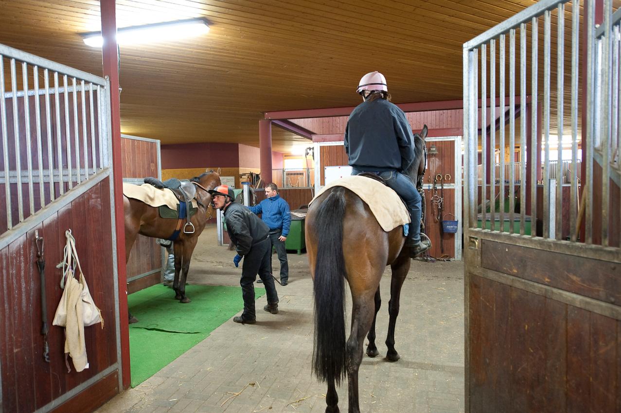 [Warendorf (07.05.2010)] Gewicht ist eines der zentralen Parameter im Galopp-Rennsport. Jeder der 64 Vollblueter in den Stallungen des Gallopptrainingszentrums Warendorf muss vor dem Training auf die Waage.