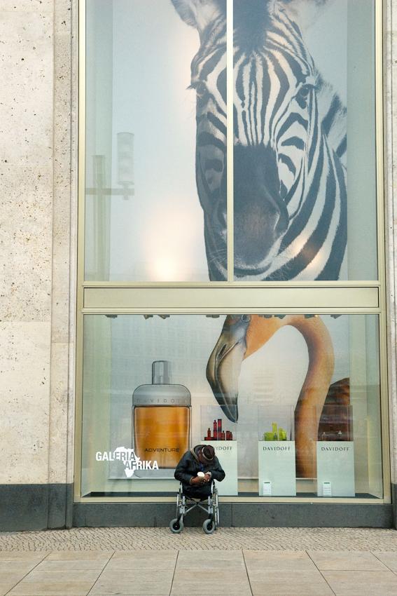 07.05.2010, 12:13 Uhr. Deutschland, Berlin. Alexanderplatz. Blick auf die Südfassade des Kaufhauses Kaufhof. In den Schaufenstern das große Bild eines Zebrakopfes und eines Flamingos zur Werbung fur die Parfumabteilung. Davor sitzt ein Mann mit Hut, gebeugtem Kopf und amputierten Beinen in einem Rollstuhl und bettelt um Kleingeld.