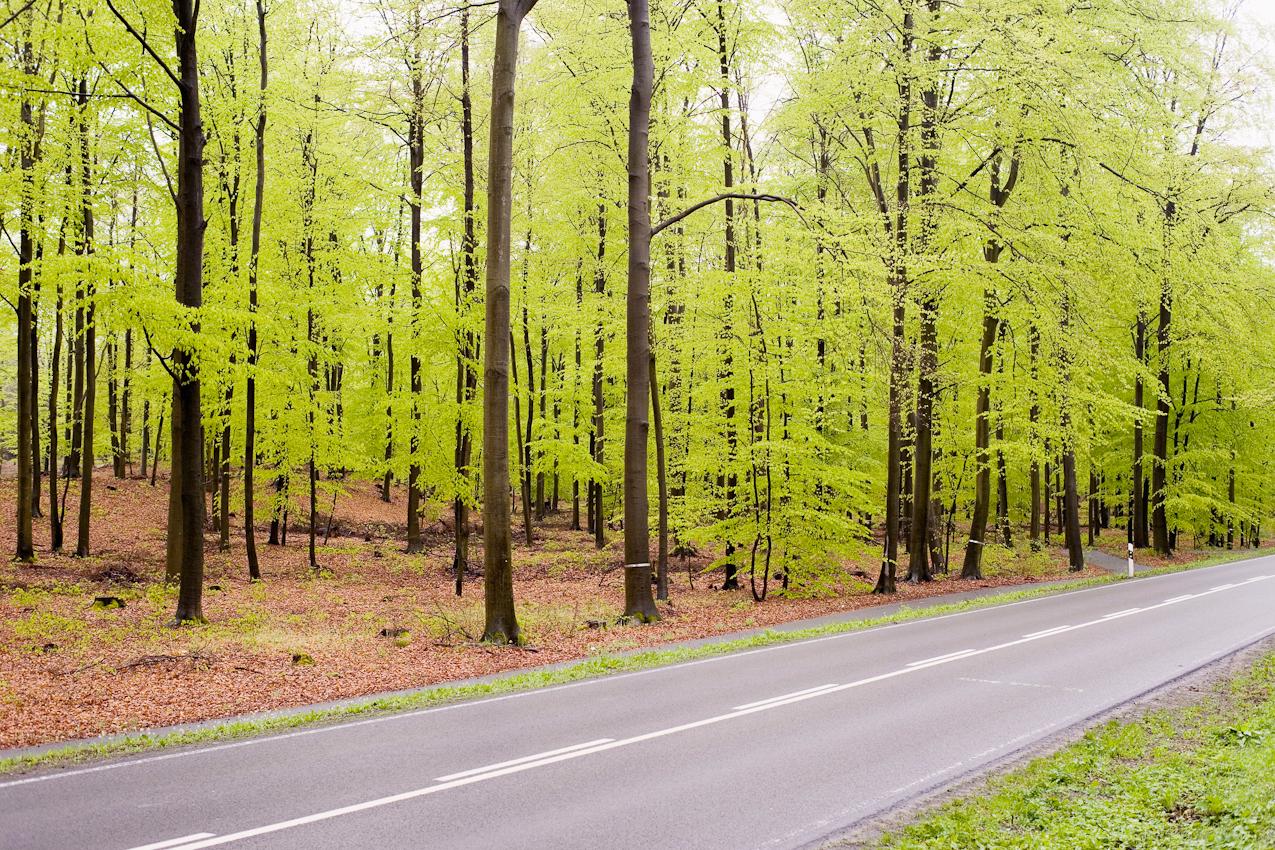 Wald bei Prenden/Brandenburg.