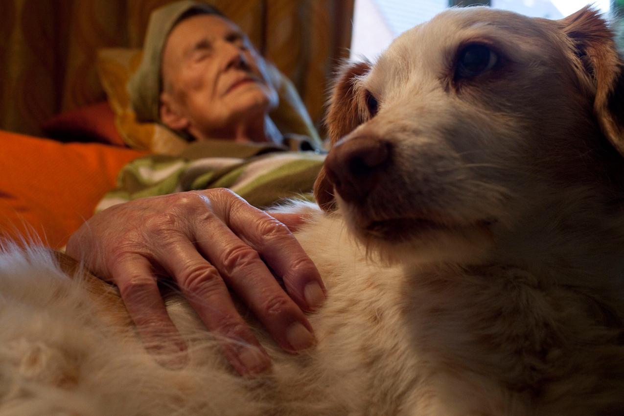 Krebs im Doppelpack: Hund Mirza bewacht den Schlaf von Frau Buch. Bei beiden wurde im vergangenen Jahr Krebs diagnostiziert: Frau Buch hat Leberkrebs, Mirza hat Rachenkrebs. Frau Buch: ,,Ich bin müde und warte jetzt. Aber mir ist nicht langweilig, mein Kind, ganz im Gegenteil!