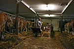 Arbeit im Stall