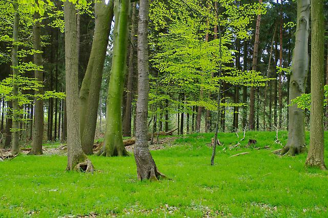 Idylle in Schleswig-Holstein 3