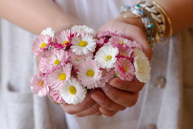 Blumen zum Essen 1