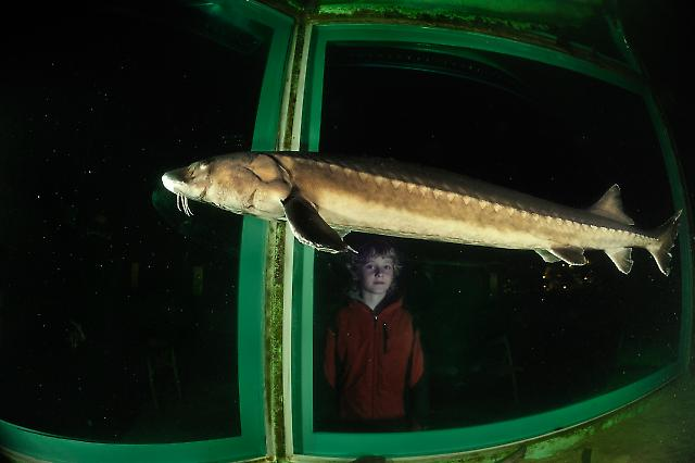 Aquarium Helgoland 3